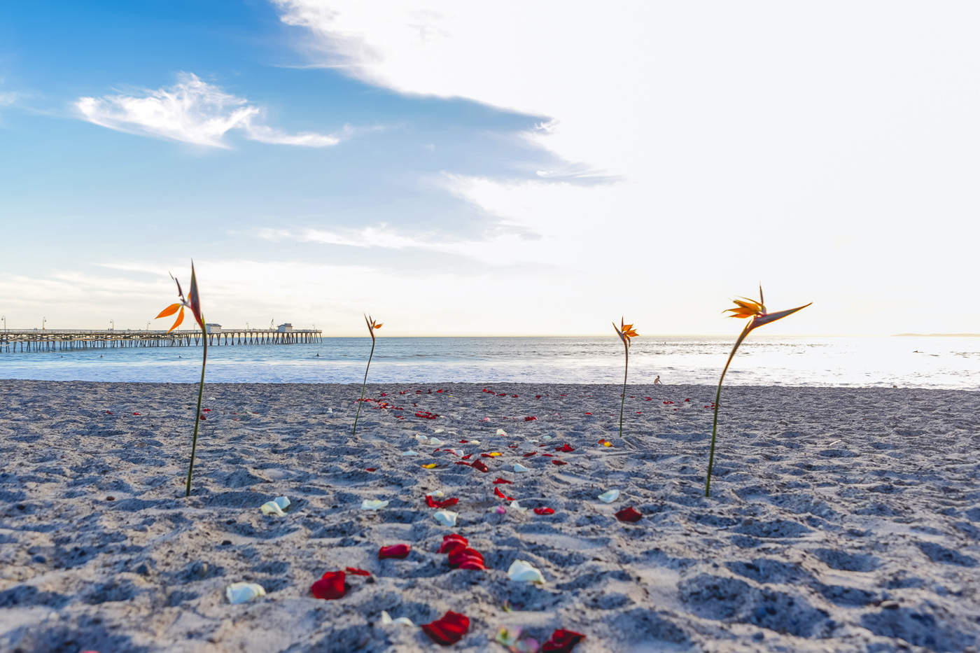 Red and white rose petals set up on sand for a beach wedding in San Clemente
